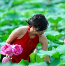Hanoi lotus tea